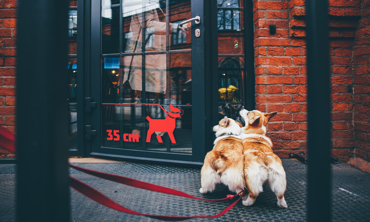 How To Open A Dog Cafe And Why You Should Open One